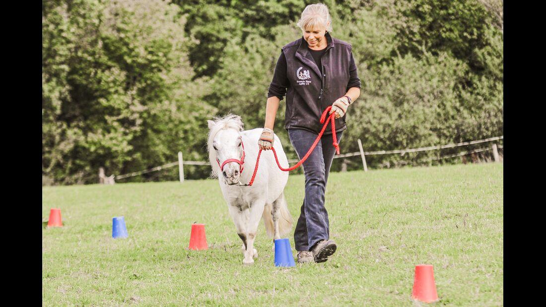 CAV Horse Agility Slalom