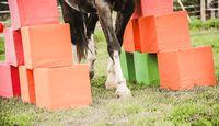 CAV Horse Agility alte Pferde Boxen