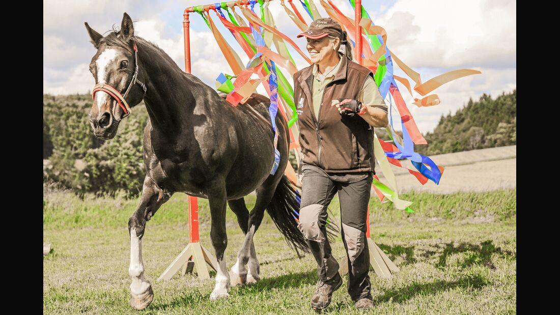 CAV Horse Agility alte Pferde Teaser