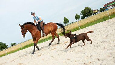 CAV Horse and Dog Trail Sabine Lang 1