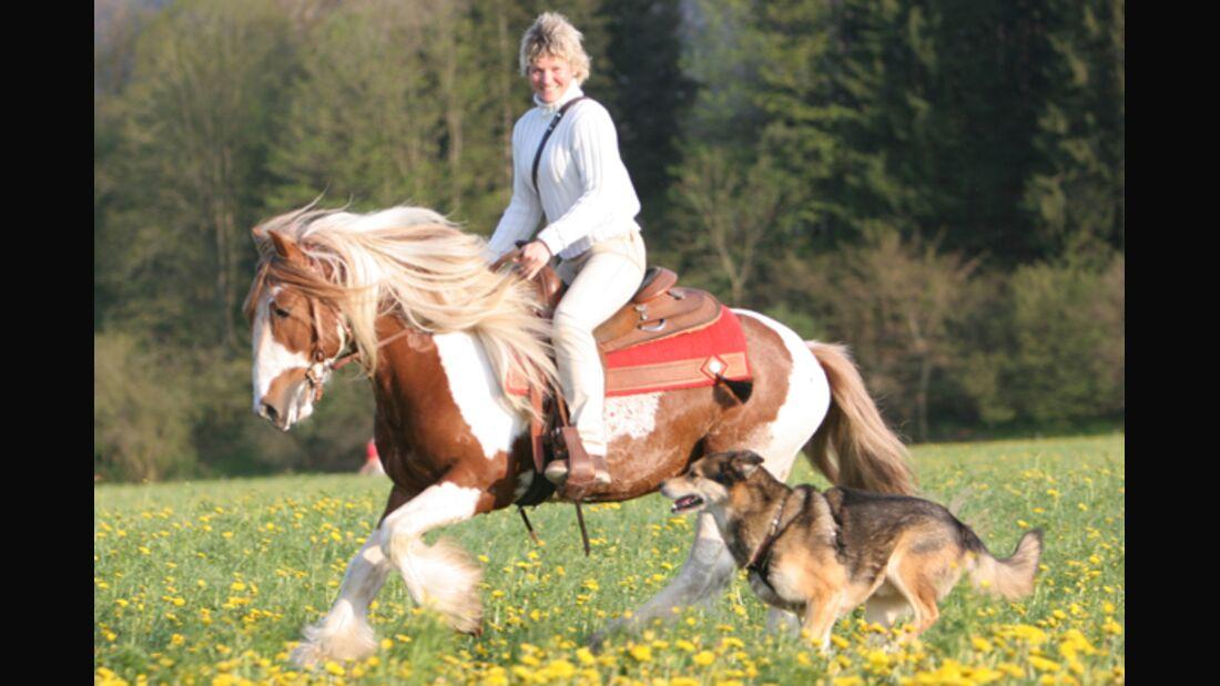 CAV Horse and Dog Trail Sabine Lang 6