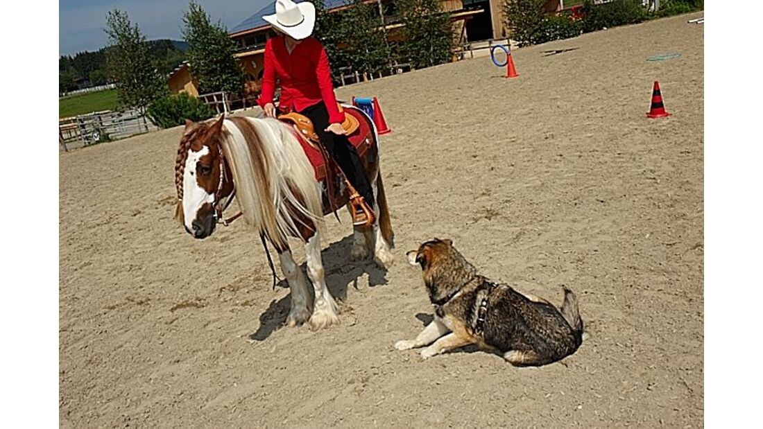 CAV Horse and Dogtrail