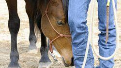 CAV Horsemanship Seil Kopf Brauner