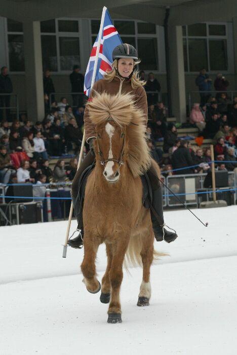 CAV Icehorse 2010: EM der Islandpferde in Berlin_01