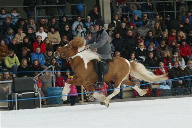 CAV Icehorse 2010: EM der Islandpferde in Berlin_06