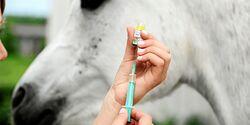 CAV Impfen Herpes Peter Thein Pferd Schimmel Klinik