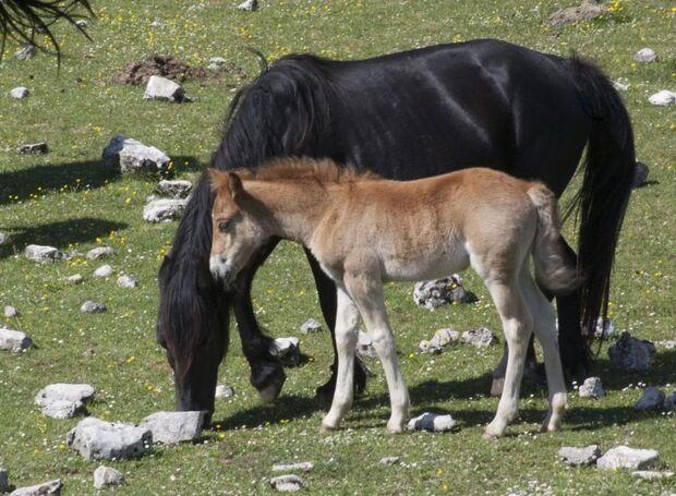 CAV Innovatives Verhalten Krüger Nürtingen Esperia Pony