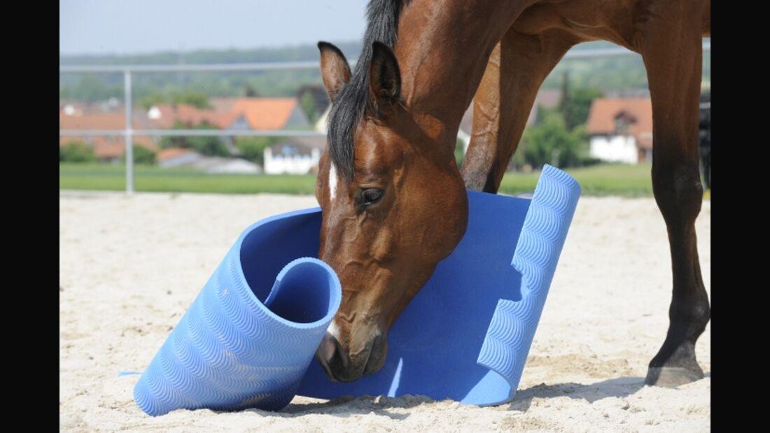 CAV Intelligenz Intelligenz-Test Intelligenztest 01 Pferd Futter
