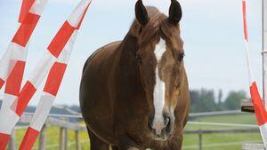 CAV Intelligenz Intelligenz-Test Intelligenztest 09 Pferd Futter GHP