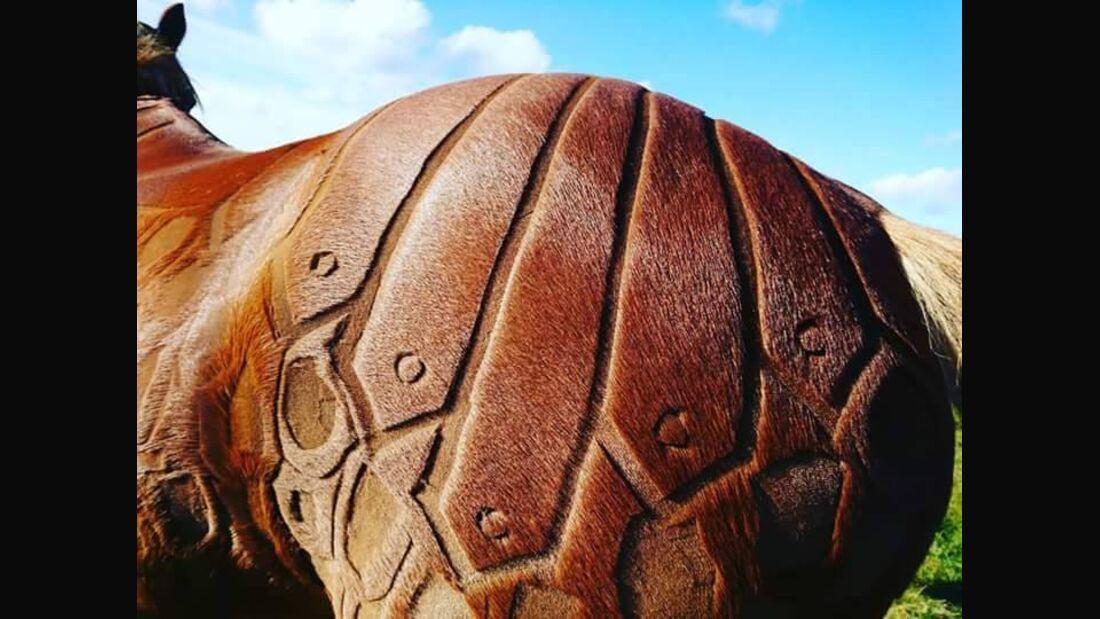 CAV Jillian Scoot Pferdefrisuren Pferdepo