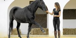 CAV Kenzie Dysli  Freiheitsdressur Horsemanship Halsring Academie
