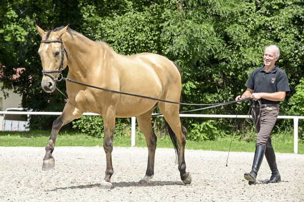 CAV Kinsky-Pferd an der Doppellonge
