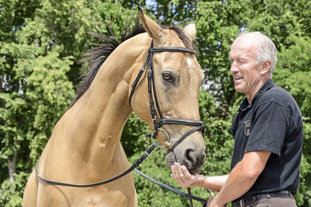 CAV Kinsky-Pferd füttern
