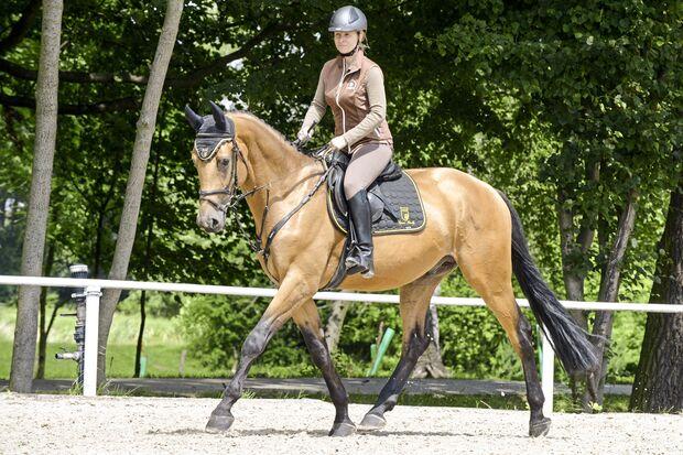 CAV Kinsky-Pferd unter dem Sattel