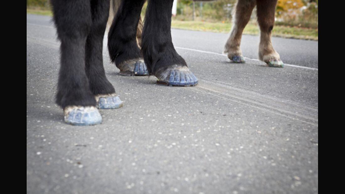CAV  Klebeschlag für Pferde