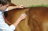 CAV Kolik Tierarzt