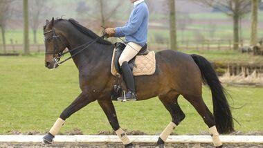 CAV Korrekturberitt Dressur Pferd