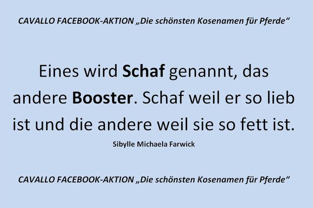 CAV Kosenamen Leserfotos 2014 - Schaf und Booster