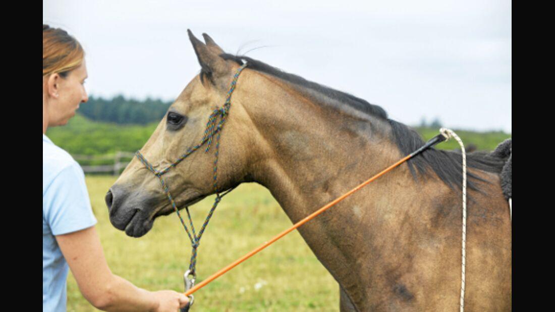CAV Kurs Parelli  Horsemanship Flößer Video