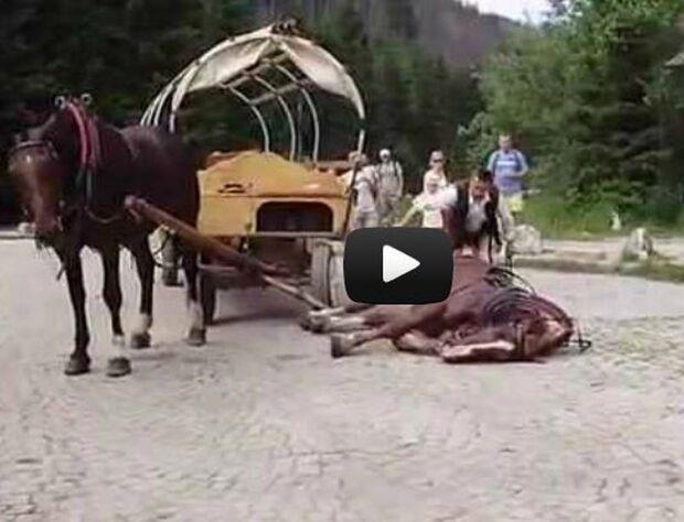 CAV Kutscher Mistgabel Fahrpferde Polen Missbrauch