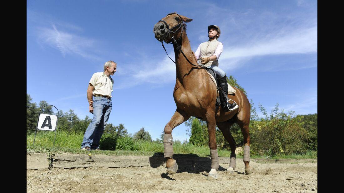CAV Lahmheit Tierarzt Diagnose