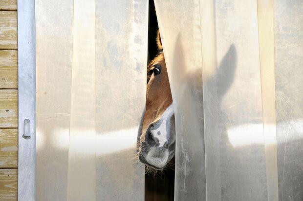 CAV Lamellen Pferd Stall Box Offenstall Nüstern