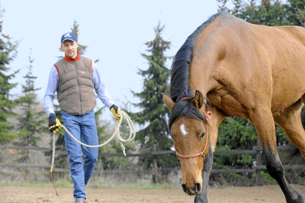 CAV Leon Schardt Horseman Horsemanship