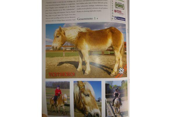 CAV Leser baut Cavallo nach 3