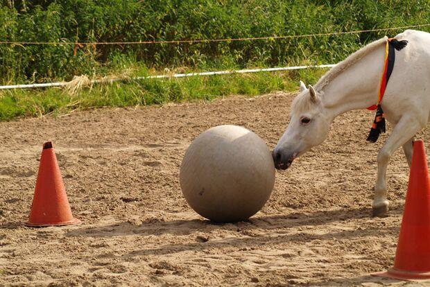 CAV-Leseraktion-Fussball-WM-2014-Anna-Grund (JPG)