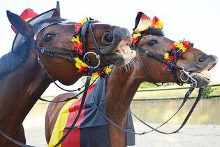 Fieber beim pferd