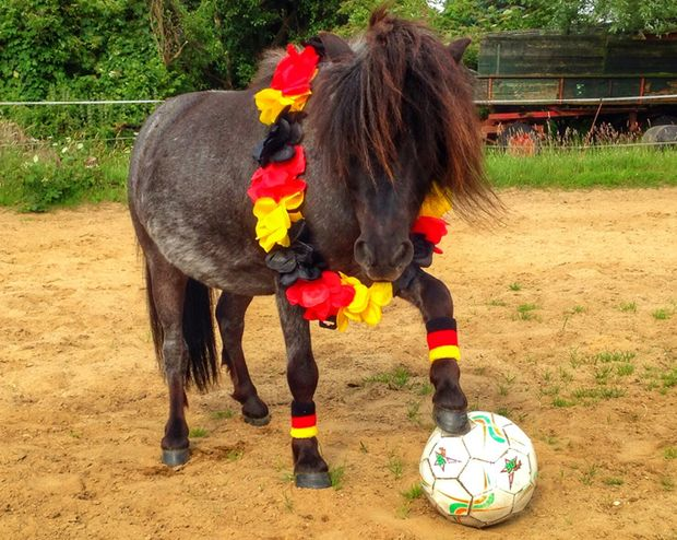 CAV-Leseraktion-Fussball-WM-2014-Julia-Hentsch (jpeg)