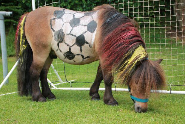 CAV-Leseraktion-Fussball-WM-2014-Susanne-Moersener (JPG)