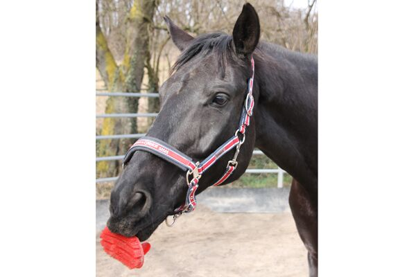 CAV Leserfotos Pferde im Frühling 2013 10