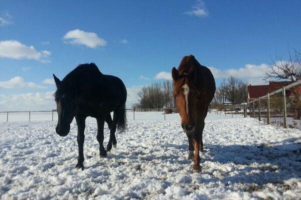 CAV Leserfotos Pferde im Frühling 2013 12