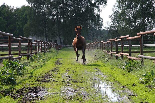 CAV Leserfotos Pferde im Frühling 2013 16