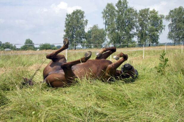 CAV Leserfotos Pferde im Frühling 2013 17