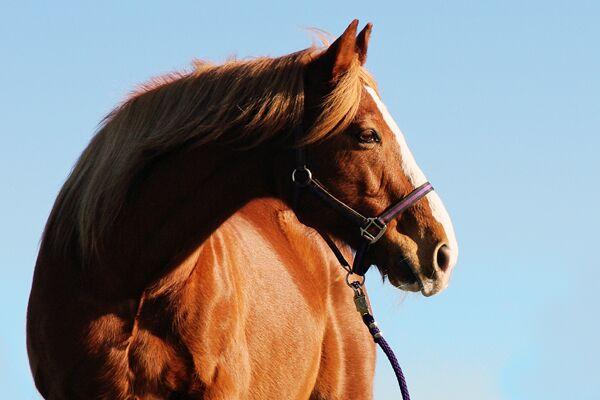 CAV Leserfotos Pferde im Frühling 2013 18