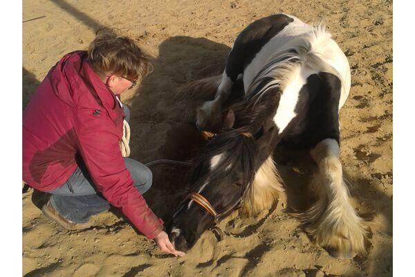 CAV Leserfotos Pferde im Frühling 2013 2