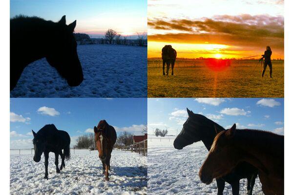 CAV Leserfotos Pferde im Frühling 2013 24
