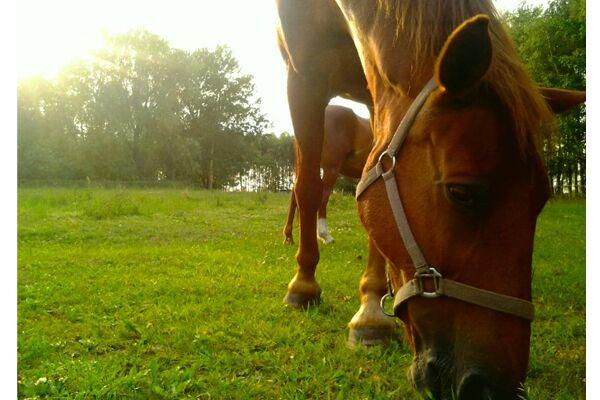 CAV Leserfotos Pferde im Frühling 2013 28