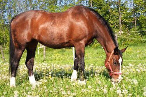 CAV Leserfotos Pferde im Frühling 2013 30