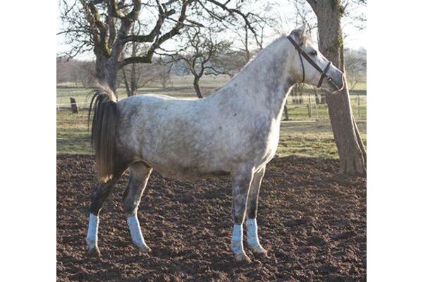 CAV Leserfotos Pferde im Frühling 2013 32