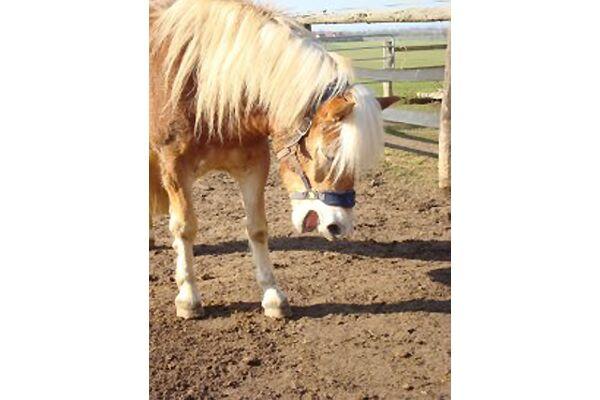 CAV Leserfotos Pferde im Frühling 2013 33