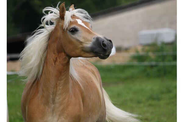 CAV Leserfotos Pferde im Frühling 2013 34