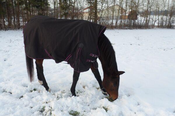 CAV Leserfotos Pferde im Frühling 2013 36