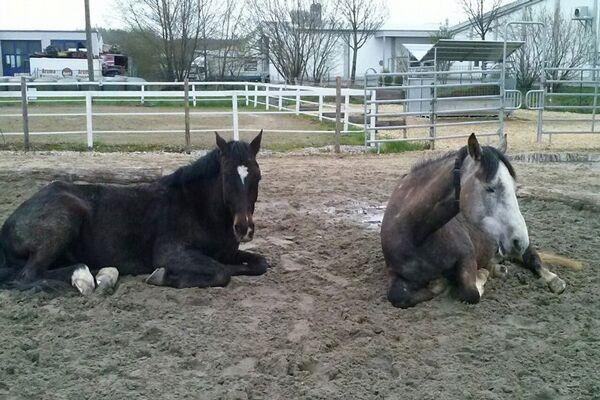 CAV Leserfotos Pferde im Frühling 2013 39