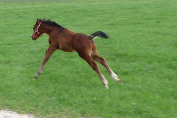 CAV Leserfotos Pferde im Frühling 2013 40
