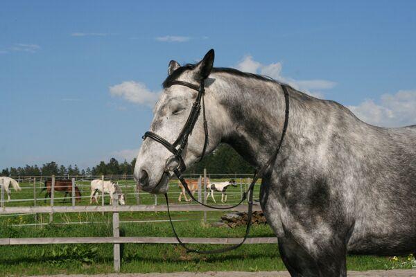 CAV Leserfotos Pferde im Frühling 2013 42