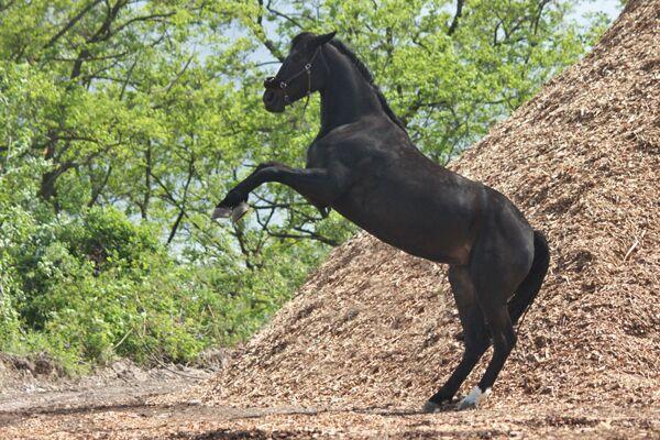 CAV Leserfotos Pferde im Frühling 2013 43