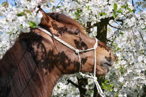CAV Leserfotos Pferde im Frühling 2013 44